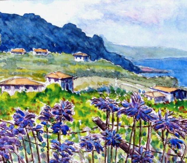 Agapanthus, rural Madeira