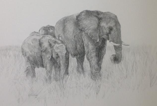 Gloria Shilling- Masai Elephants