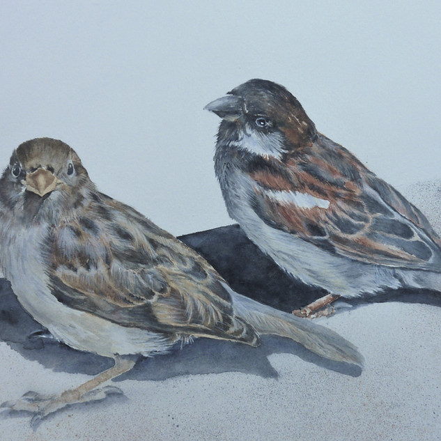 Julie Curry - Two Sparrows