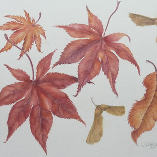Julie Curry-Autumn Leaves