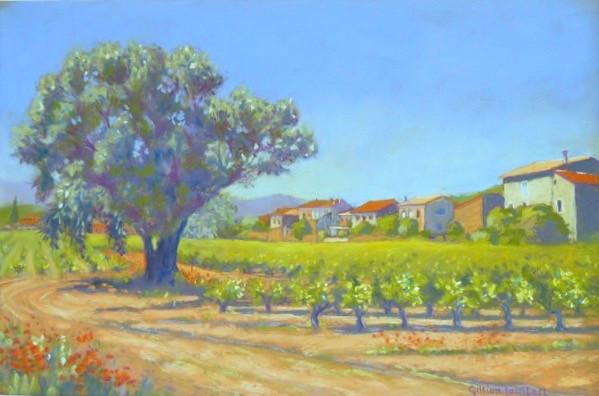 Roquebrun Vines