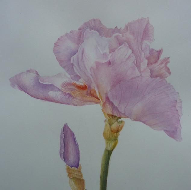 Julie Curry-Iris