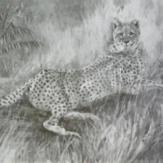 Cheetah Surprise