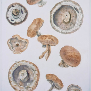 Melody of mushrooms