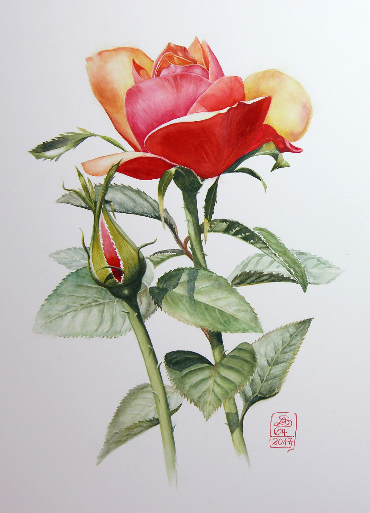 10.Absolon_Gelb-Rote_Rose