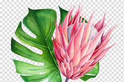 red-watercolor-flowers-botanical-illustr