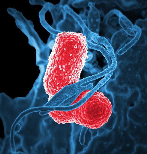 bacteria-811861_1920.jpg