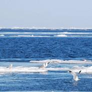 Ocean Flock
