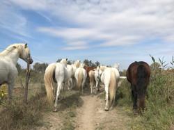 randonnée à cheval Camargue