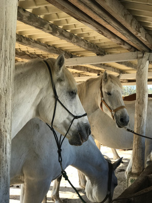 Balades à cheval, randonnées, pension