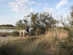 balade a cheval camargue