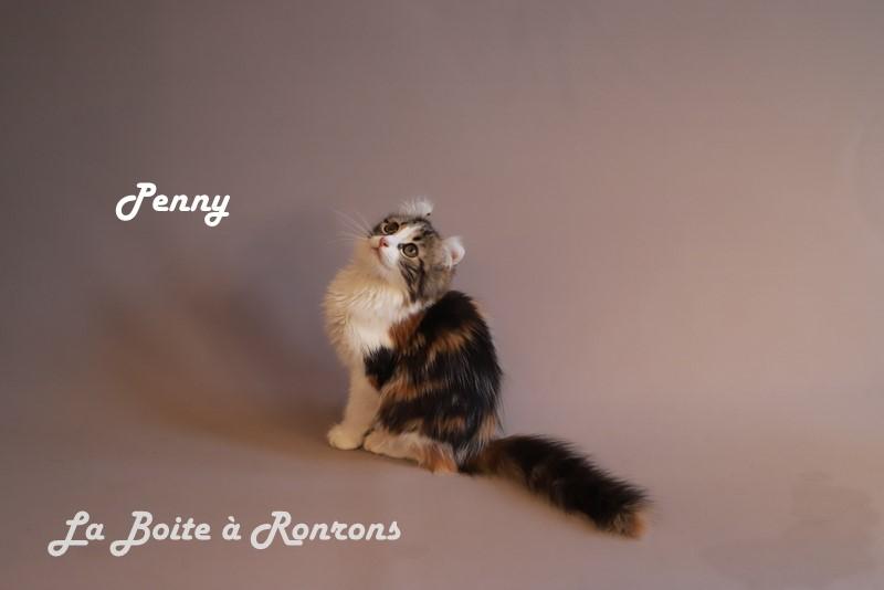 penny (19)