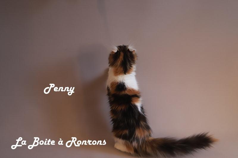 penny (5)