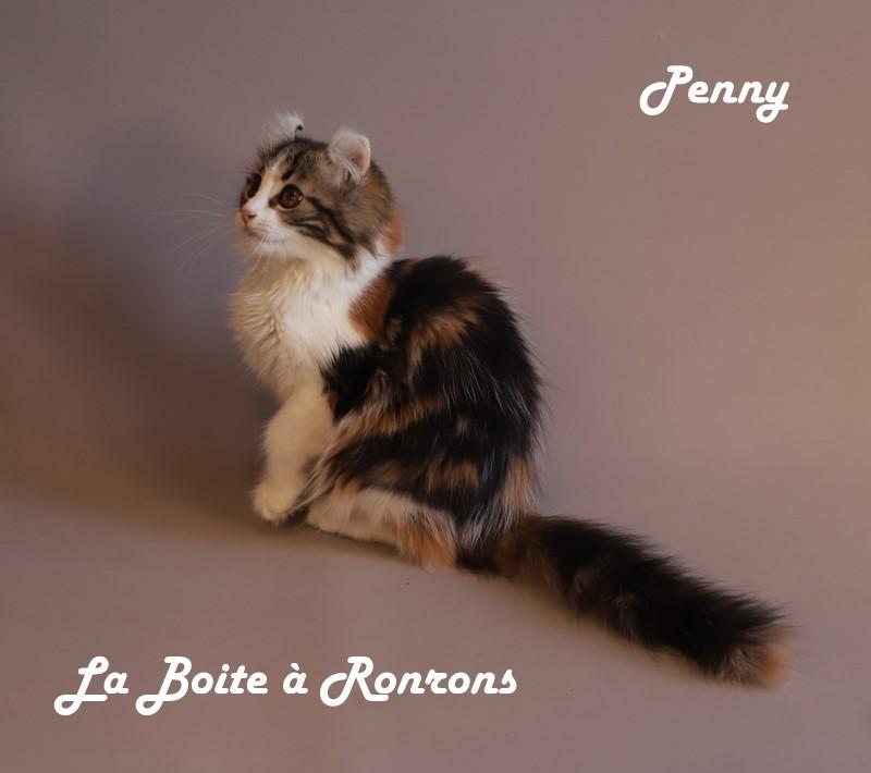 penny (4)