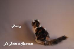 penny (14)