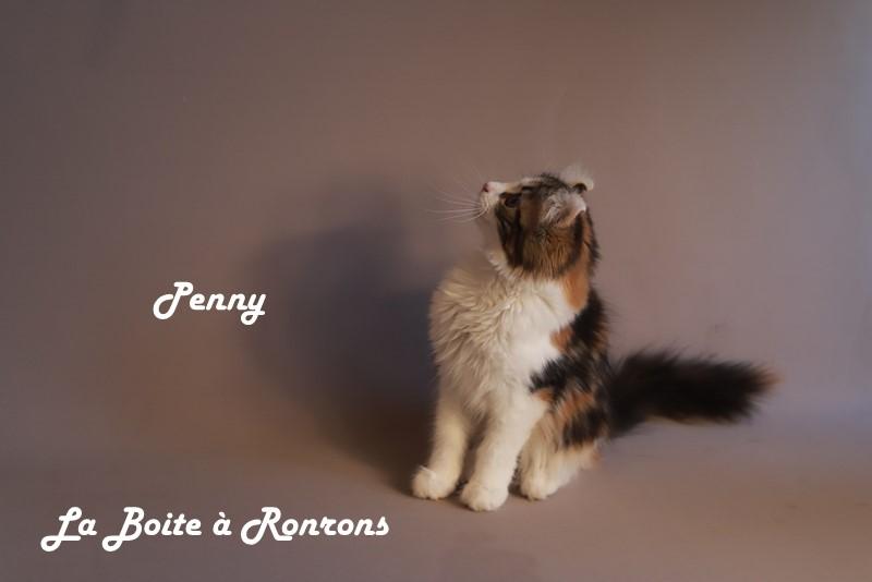 penny (22)