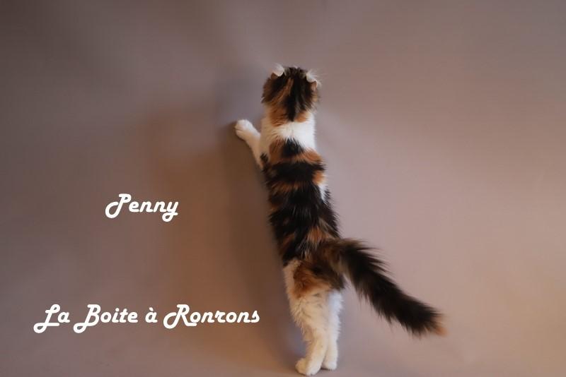 penny (9)