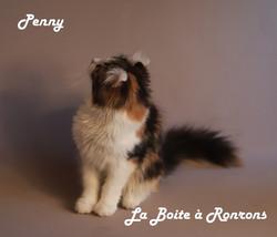 penny (16)