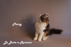 penny (21)