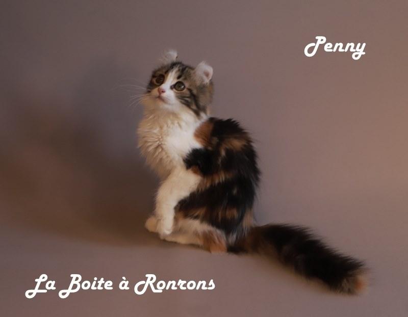 penny (15)
