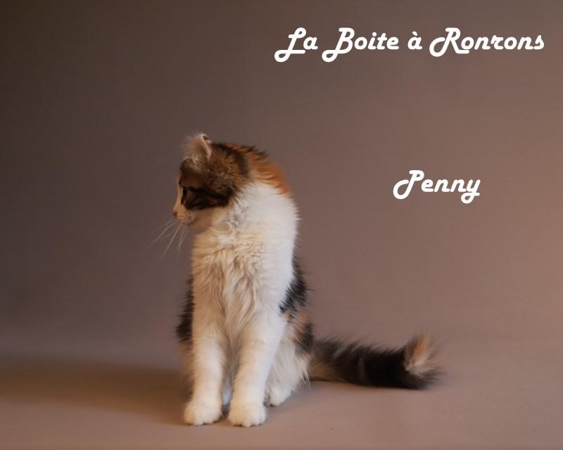 penny (8)