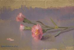 Les oeillets roses