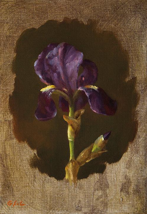 L'iris, JC Gondouin
