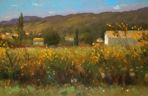 Les genêts en fleurs, JC Gondouin