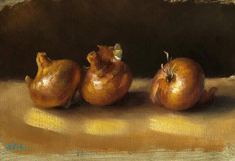 Les petits oignons, JC Gondouin