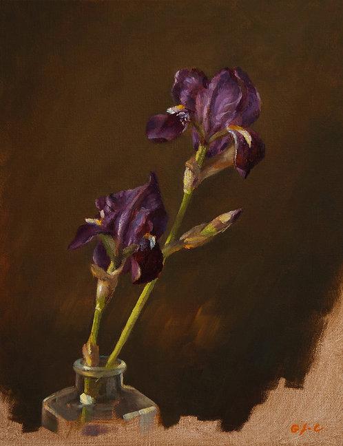 Les iris du jardin, JC Gondouin