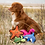 Beco pets selection of eco dog toys with dog on the beach
