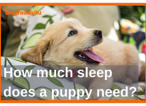 How much sleep does my puppy need?