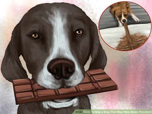 Easter Chocolate is Poison to your Dog