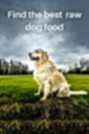 Find the best raw dog food and link to shop all raw dog foods UK