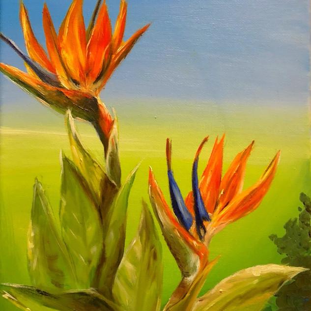 Orange Bird of Paradise- SOLD