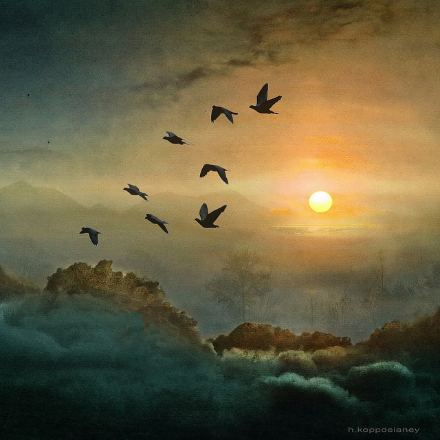 Unfurl Your Wings