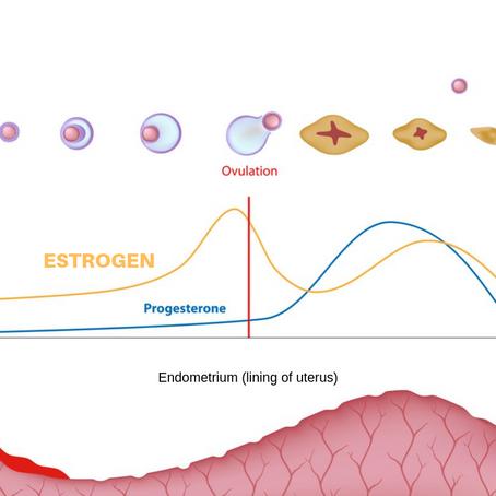 Estrogen Dominance- Simplified!