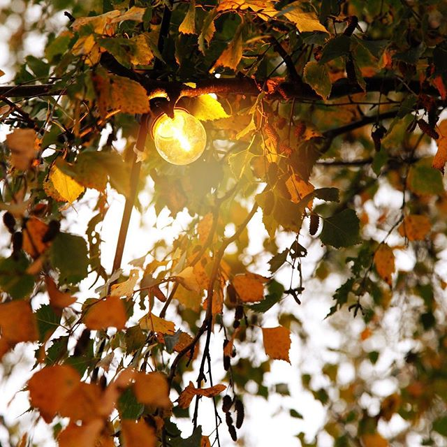 #🍁🍂_#autumn #light #inspo