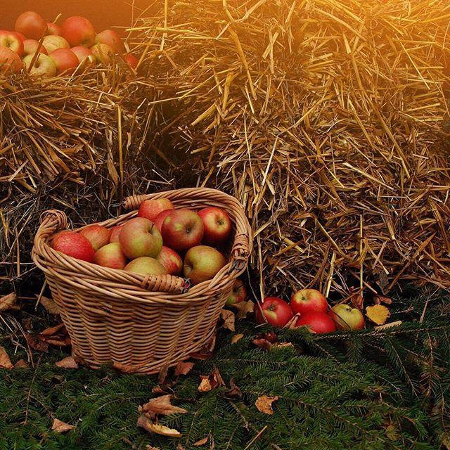 🍂🍁_#autumn #apple