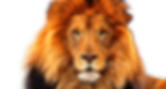 big-male-lion-png-23.png