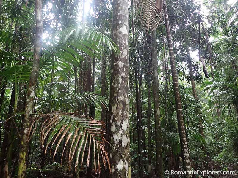 Fraser Island Rain Forest View