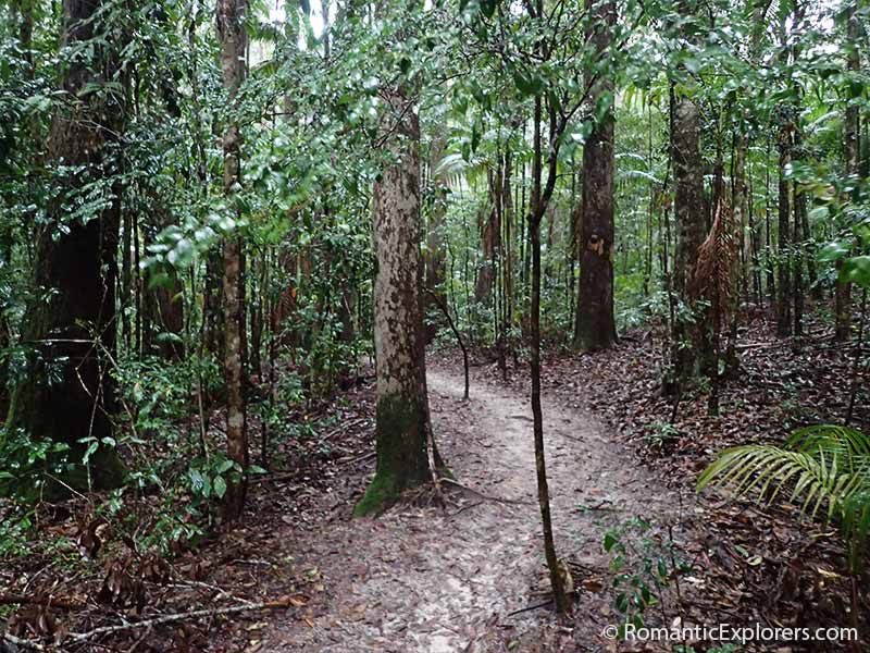 Fraser Island Rain Forest path