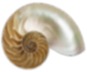 Nautilus-Shell.png