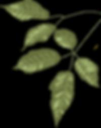 hojas2_edited.png