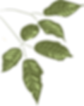 hojas2.png