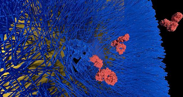 antibody gating.png