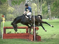 chute cheval wix.jpg