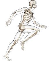 osteopathe_squelette_3.jpg