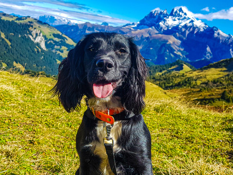 Autumnal Adventures: Hiking in Les Portes du Soleil