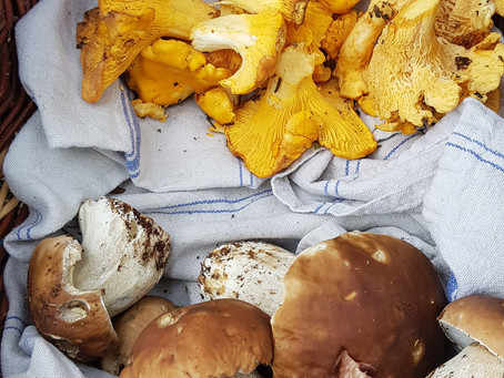 Food for Thought...Ramblings of an amateur Mycologist